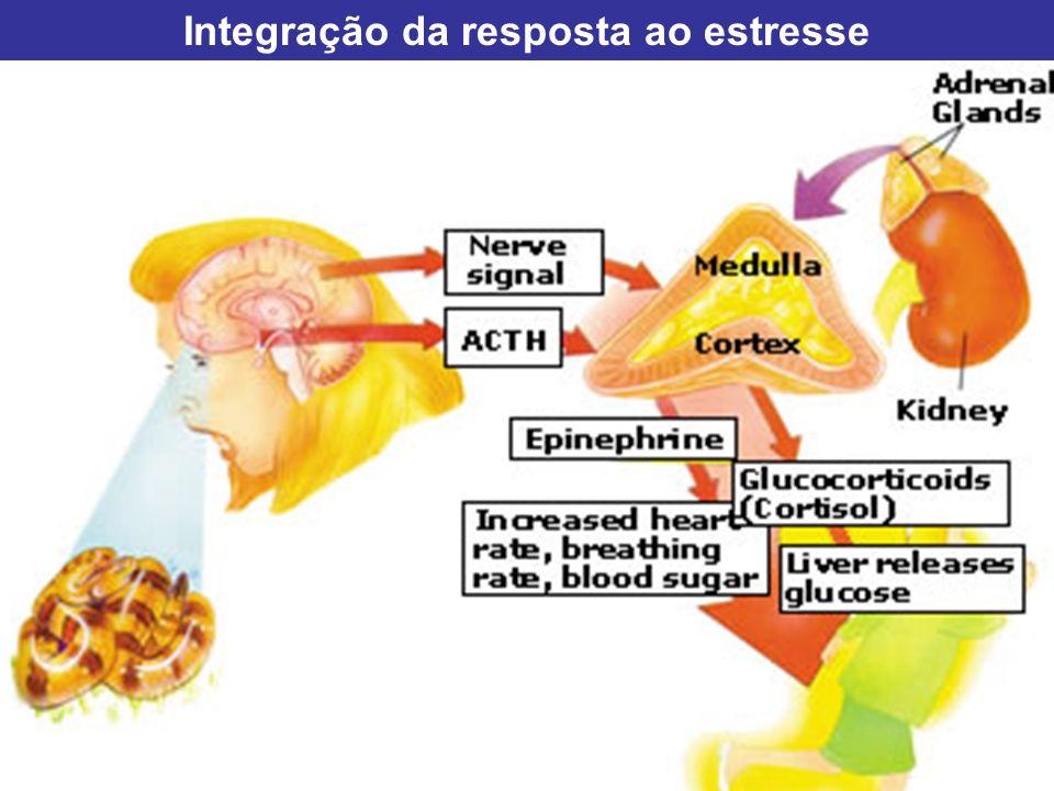 Integração da resposta ao estresse