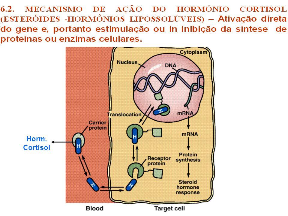 Horm. Cortisol