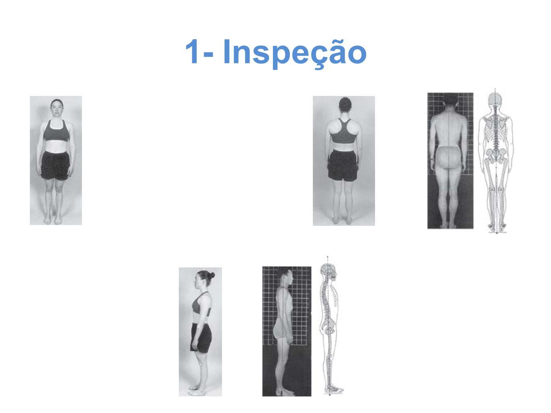 1- Inspeção