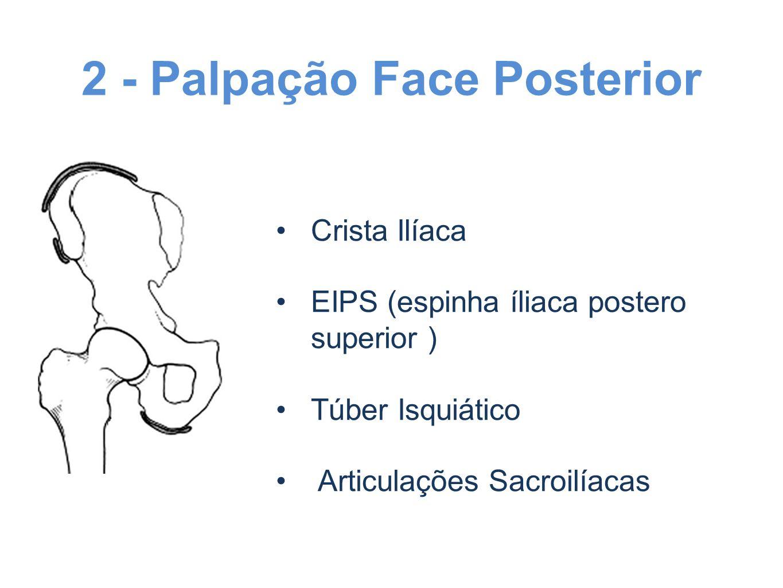 2 - Palpação Face Posterior