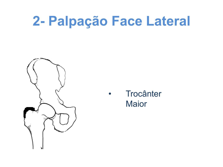2- Palpação Face Lateral