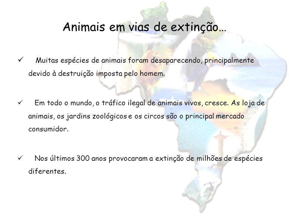 Animais em vias de extinção…