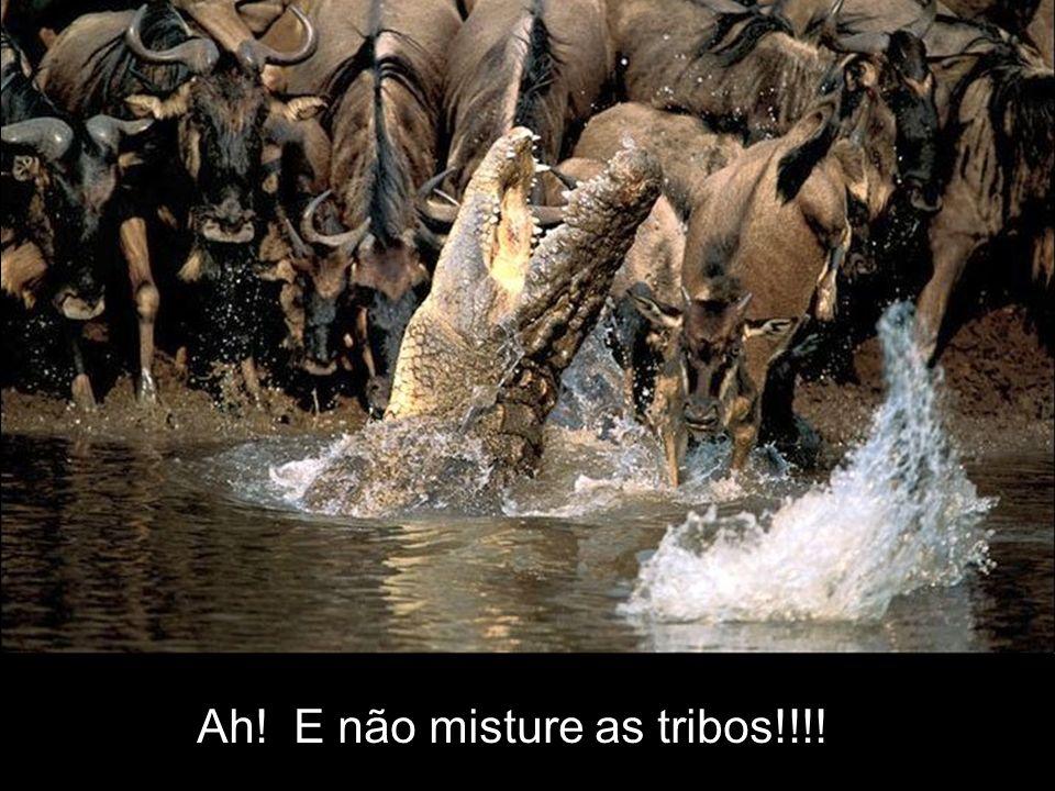 Ah! E não misture as tribos!!!!