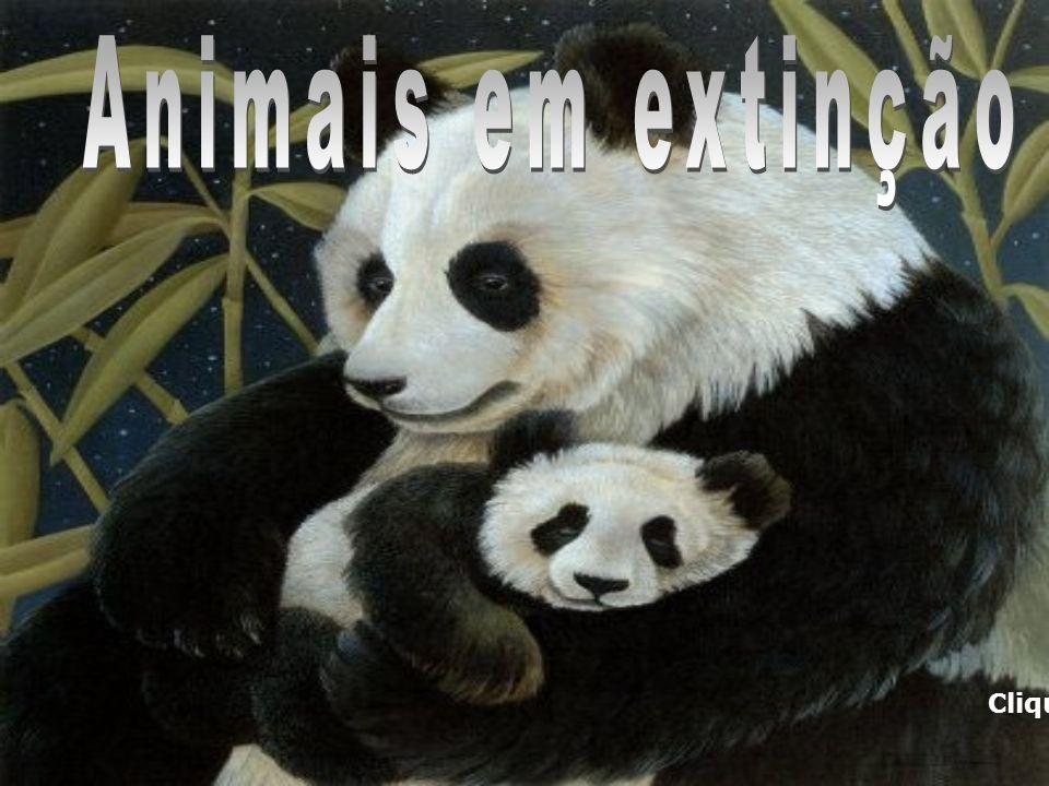 Animais em extinção Clique