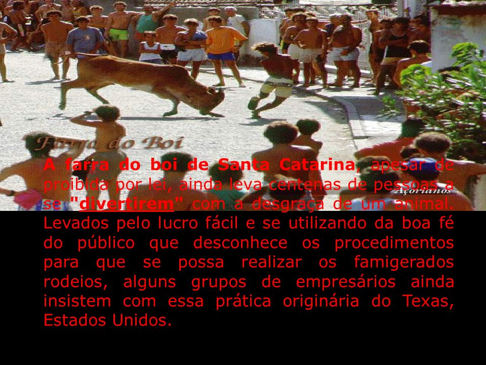 RODEIO E MAUS TRATOS AOS ANIMAIS