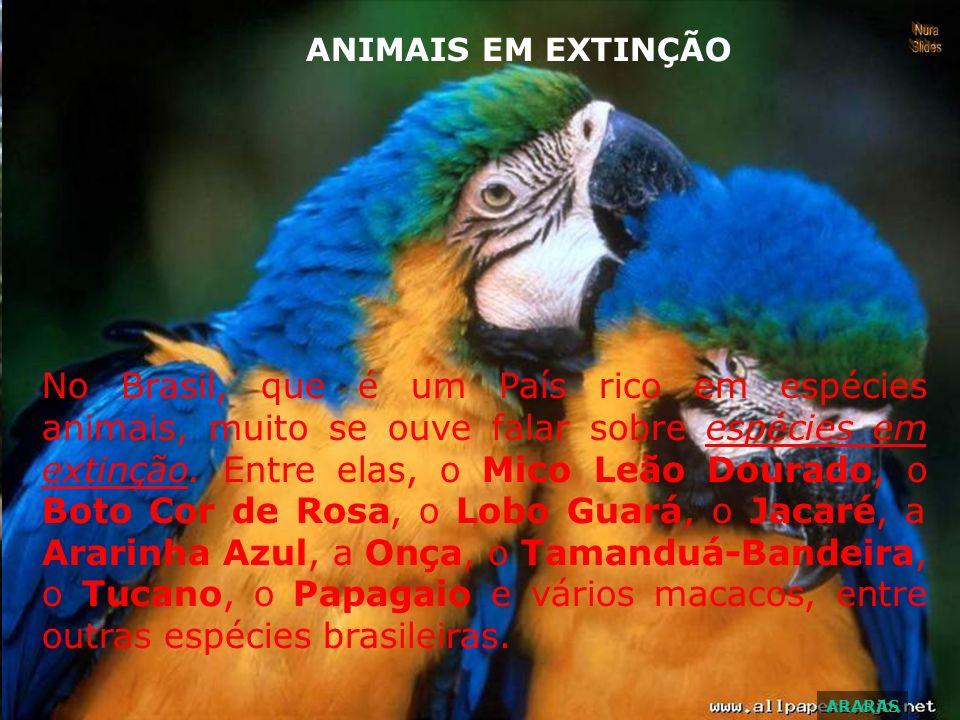 ANIMAIS EM EXTINÇÃO Nura. Slides.