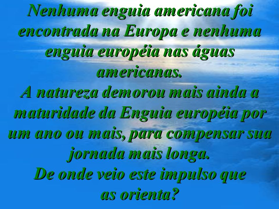 Nenhuma enguia americana foi encontrada na Europa e nenhuma enguia européia nas águas americanas.