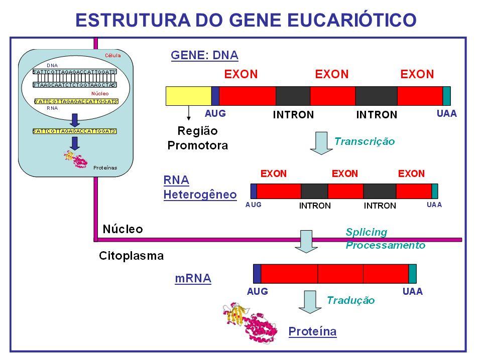 Biologia celular basica