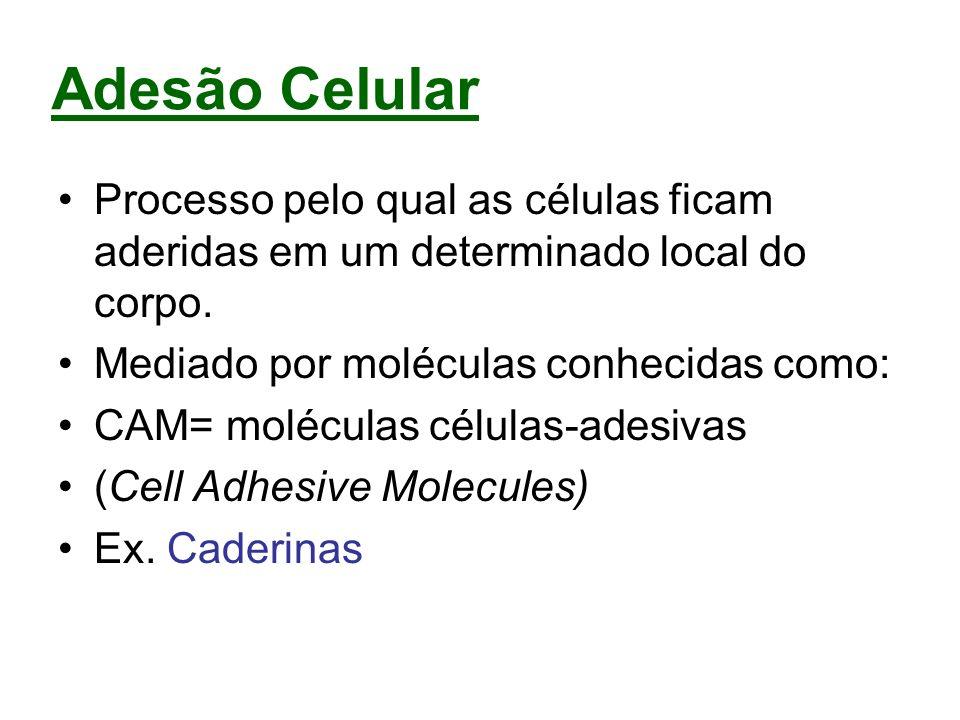 Adesão CelularProcesso pelo qual as células ficam aderidas em um determinado local do corpo. Mediado por moléculas conhecidas como: