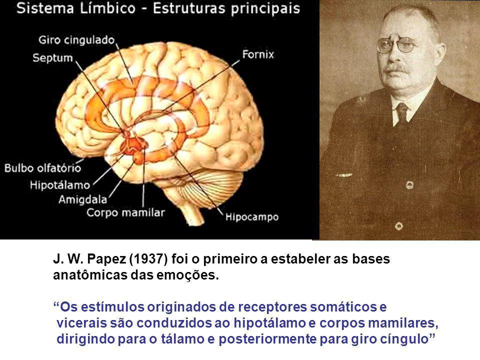 J. W. Papez (1937) foi o primeiro a estabeler as bases