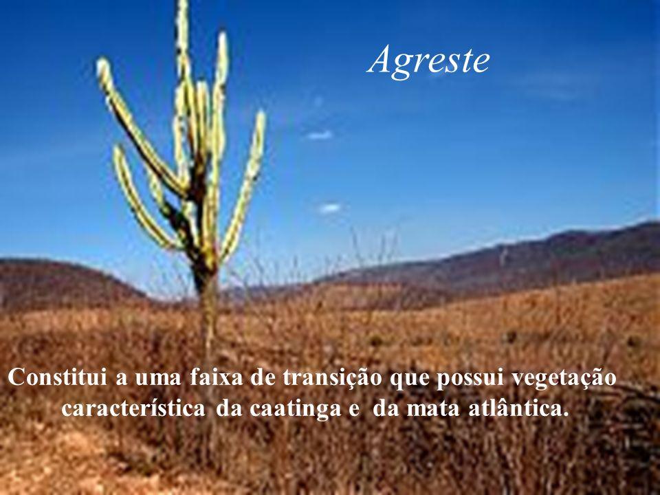 Agreste Constitui a uma faixa de transição que possui vegetação