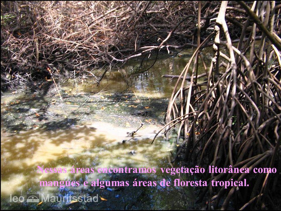 Nessas áreas encontramos vegetação litorânea como