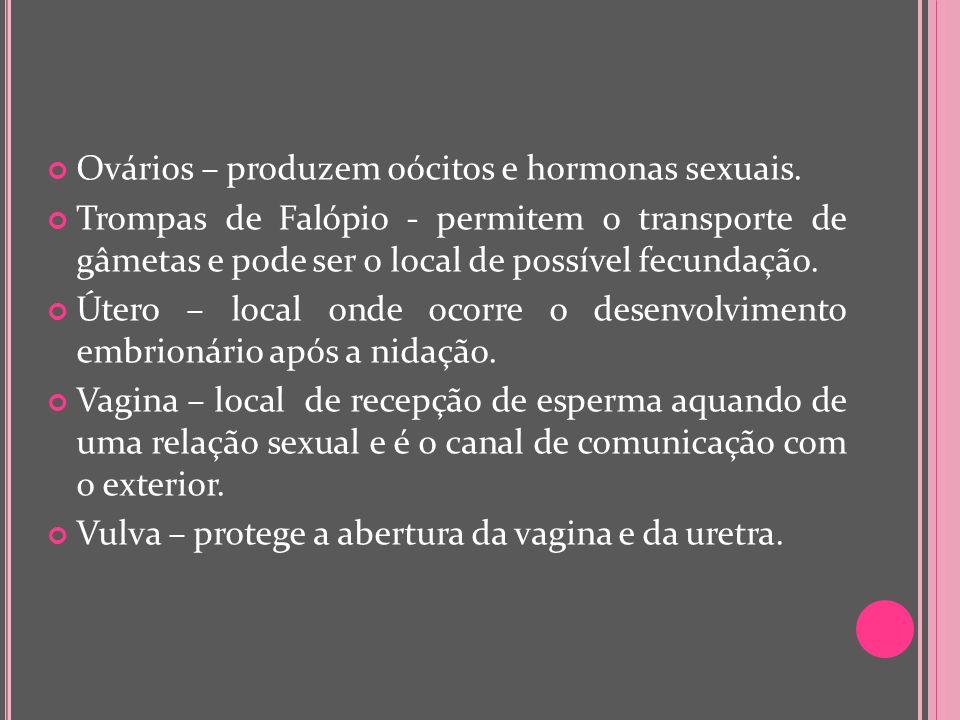 Ovários – produzem oócitos e hormonas sexuais.