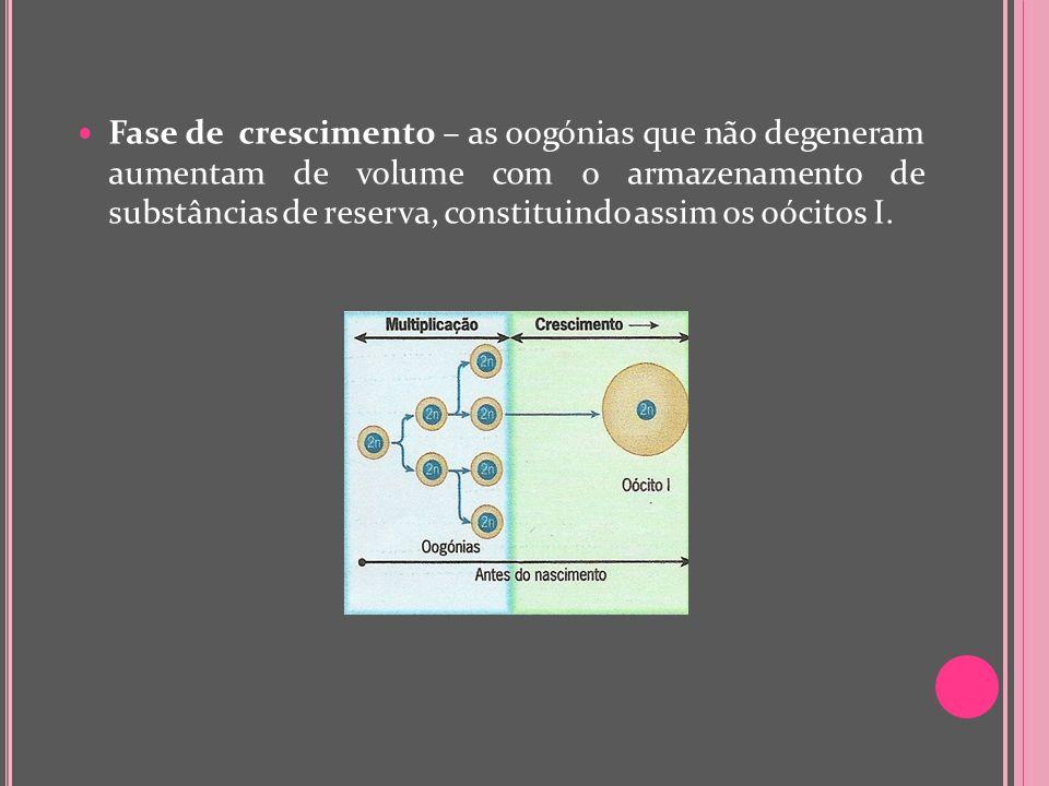 Fase de crescimento – as oogónias que não degeneram aumentam de volume com o armazenamento de substâncias de reserva, constituindo assim os oócitos I.