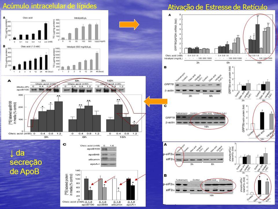 ↓ da secreção de ApoB Acúmulo intracelular de lípides