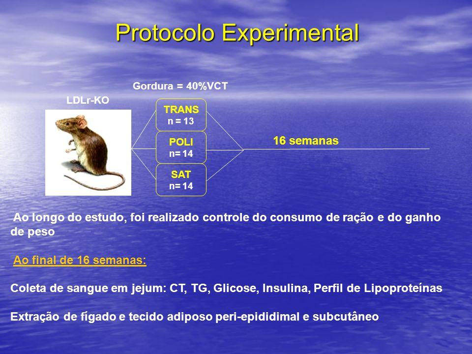 Protocolo Experimental