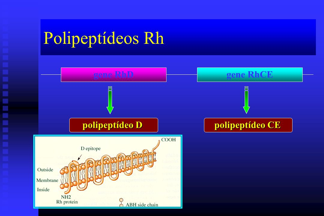 Polipeptídeos Rh gene RhD gene RhCE polipeptídeo D polipeptídeo CE