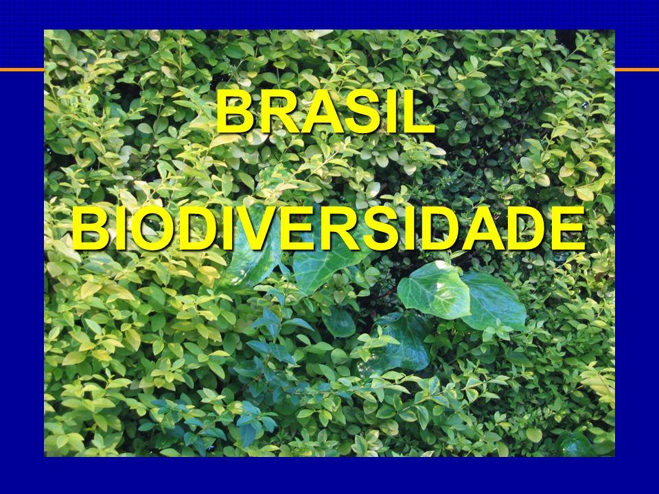 BRASIL BIODIVERSIDADE