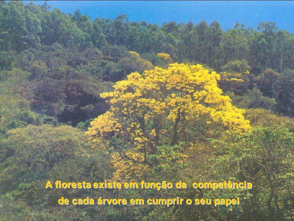 A floresta existe em função da competência