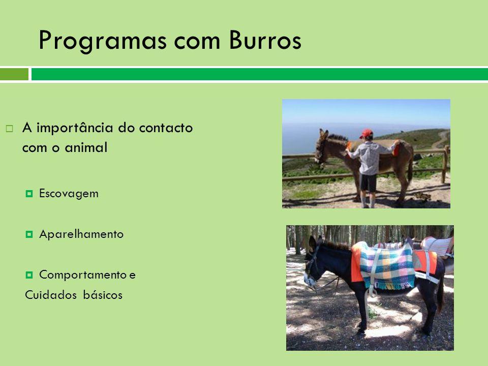 Programas com Burros A importância do contacto com o animal Escovagem