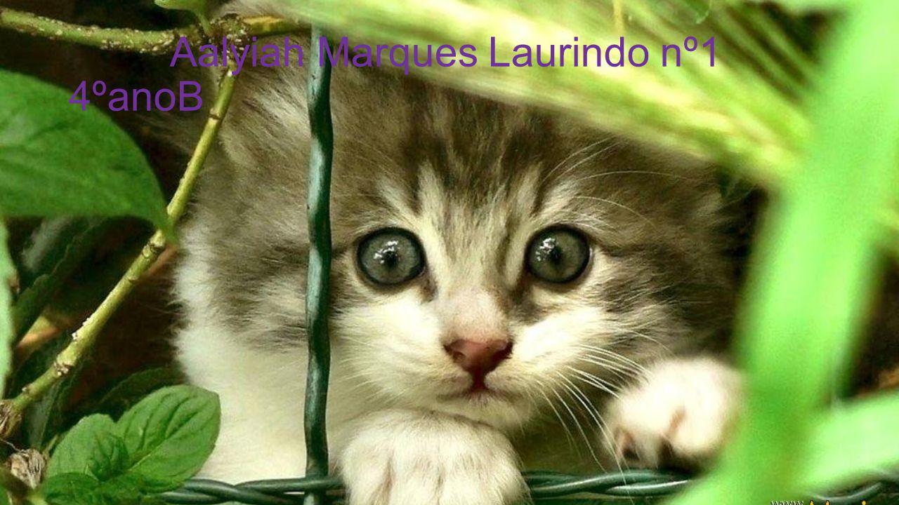 Aalyiah Marques Laurindo nº1 4ºanoB