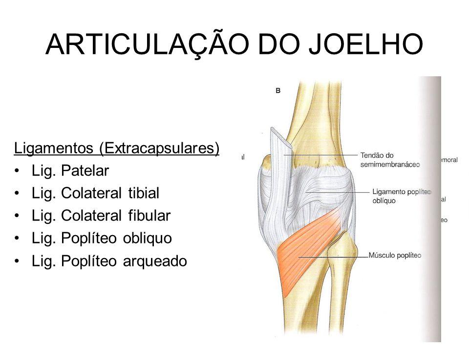 ARTICULAÇÃO DO JOELHO Ligamentos (Extracapsulares) Lig. Patelar