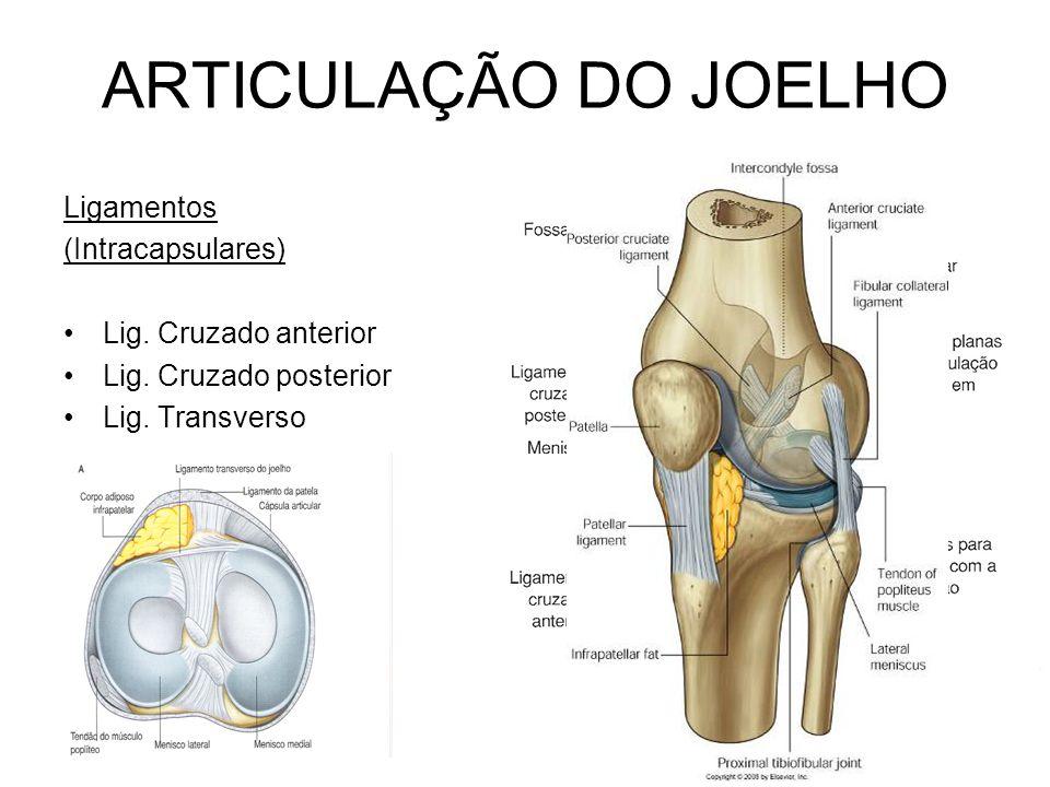 ARTICULAÇÃO DO JOELHO Ligamentos (Intracapsulares)