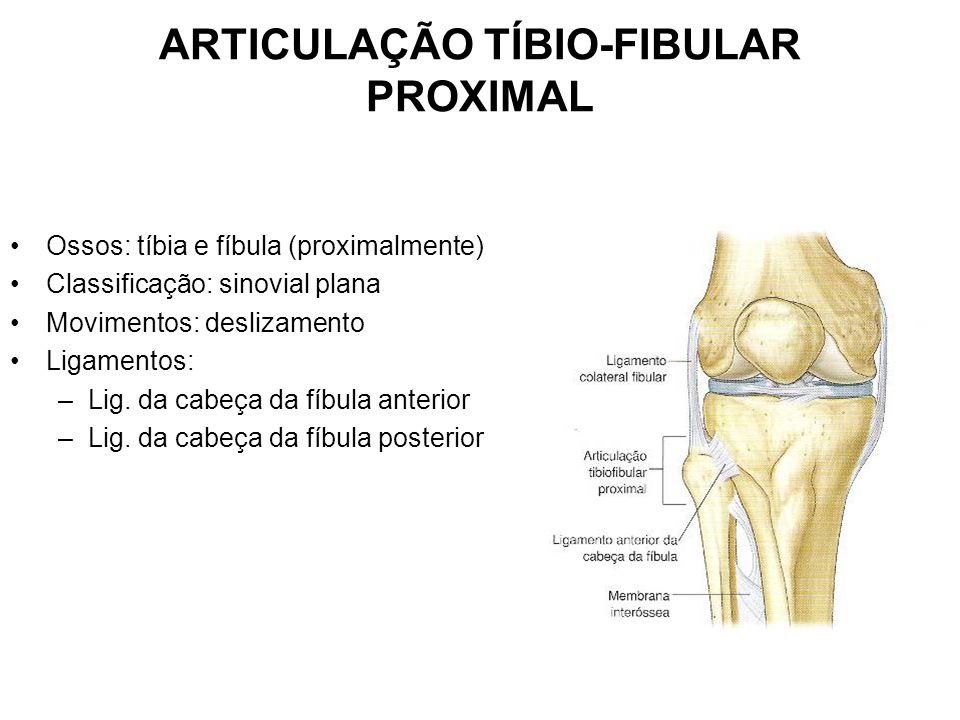 ARTICULAÇÃO TÍBIO-FIBULAR PROXIMAL