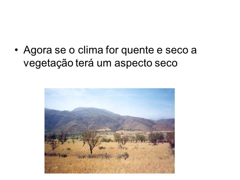 Agora se o clima for quente e seco a vegetação terá um aspecto seco