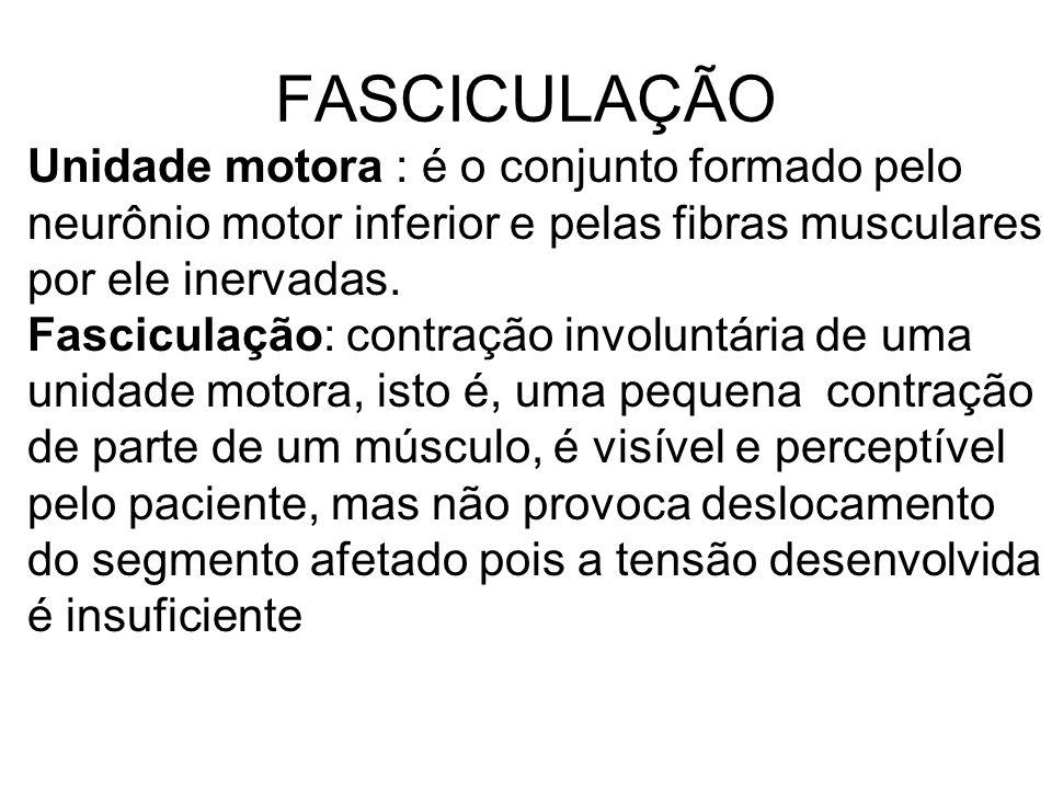 FASCICULAÇÃO Unidade motora : é o conjunto formado pelo neurônio motor inferior e pelas fibras musculares por ele inervadas.