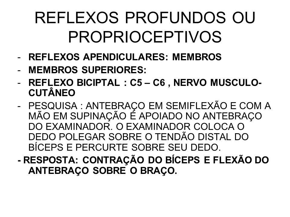REFLEXOS PROFUNDOS OU PROPRIOCEPTIVOS