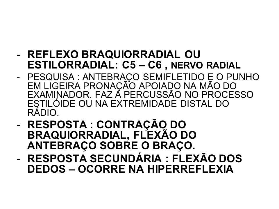 REFLEXO BRAQUIORRADIAL OU ESTILORRADIAL: C5 – C6 , NERVO RADIAL