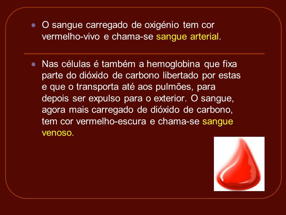 O sangue carregado de oxigénio tem cor vermelho-vivo e chama-se sangue arterial.