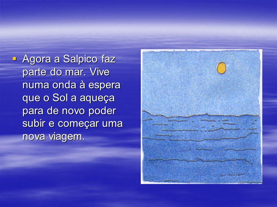 Agora a Salpico faz parte do mar