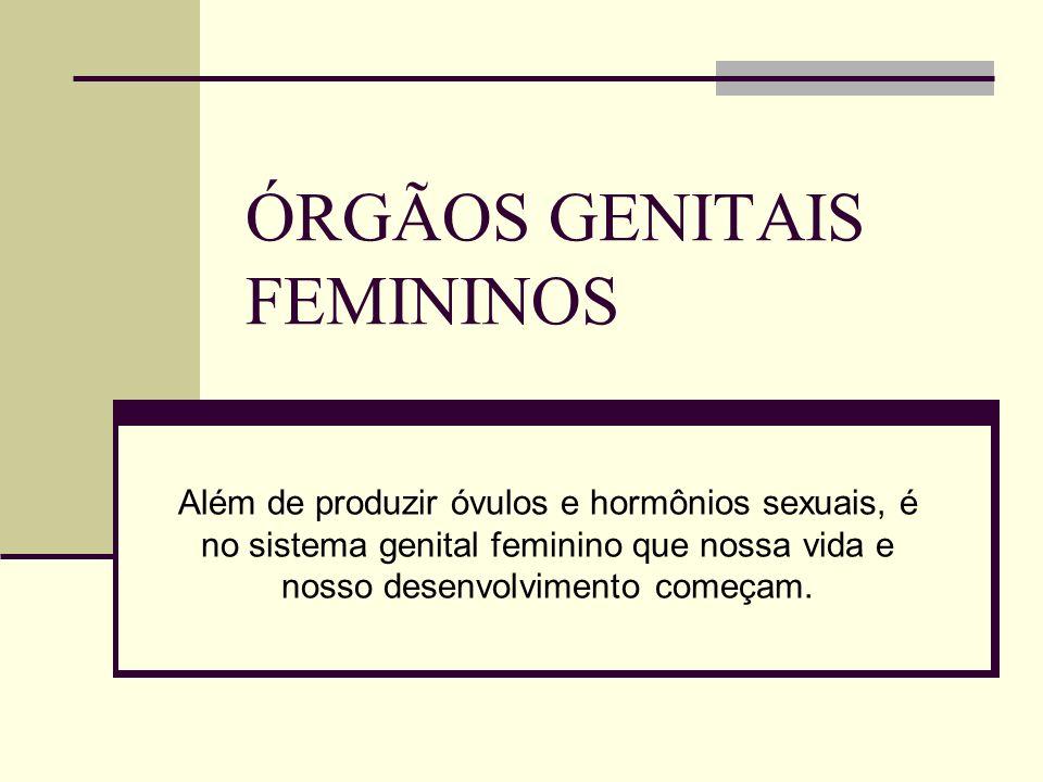 ÓRGÃOS GENITAIS FEMININOS