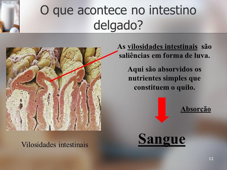 O que acontece no intestino delgado