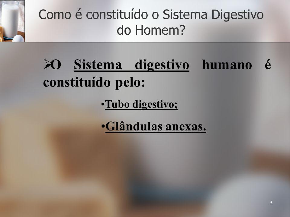 Como é constituído o Sistema Digestivo do Homem