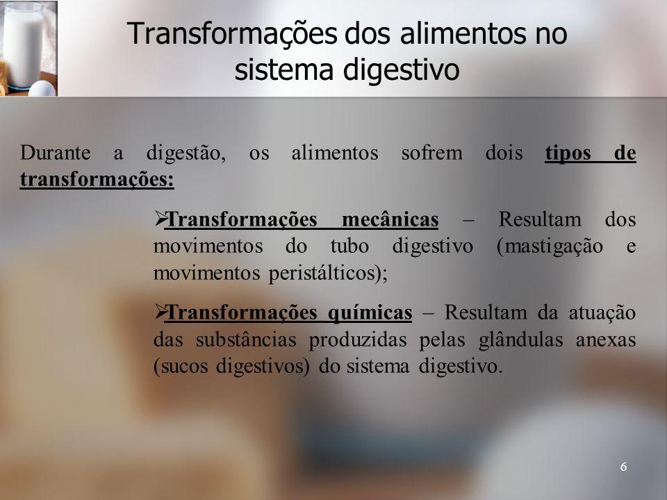 Transformações dos alimentos no sistema digestivo