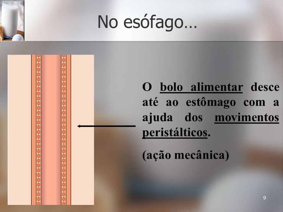 No esófago…O bolo alimentar desce até ao estômago com a ajuda dos movimentos peristálticos.