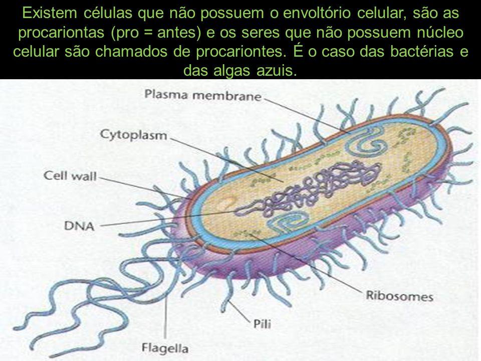Existem células que não possuem o envoltório celular, são as procariontas (pro = antes) e os seres que não possuem núcleo celular são chamados de procariontes.