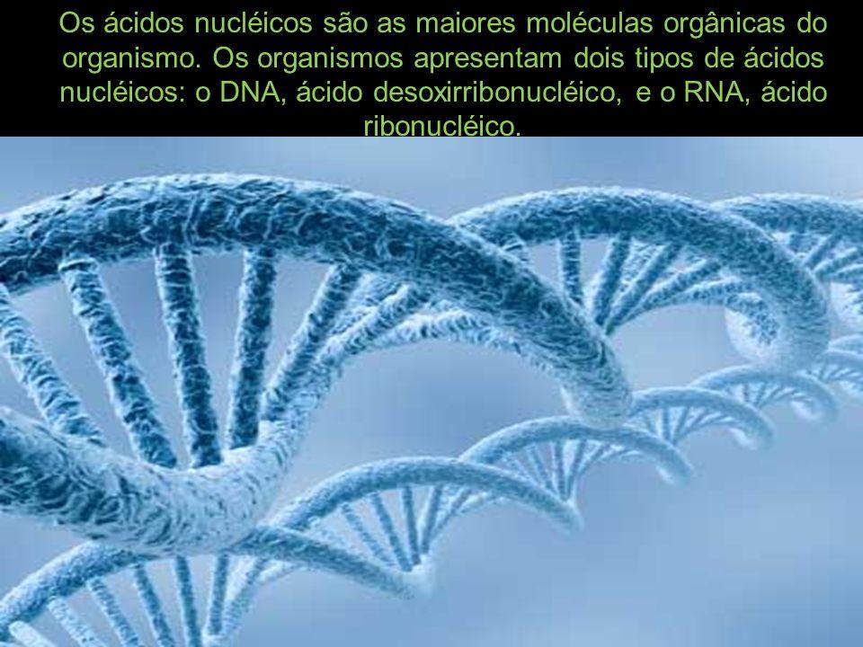 Os ácidos nucléicos são as maiores moléculas orgânicas do organismo