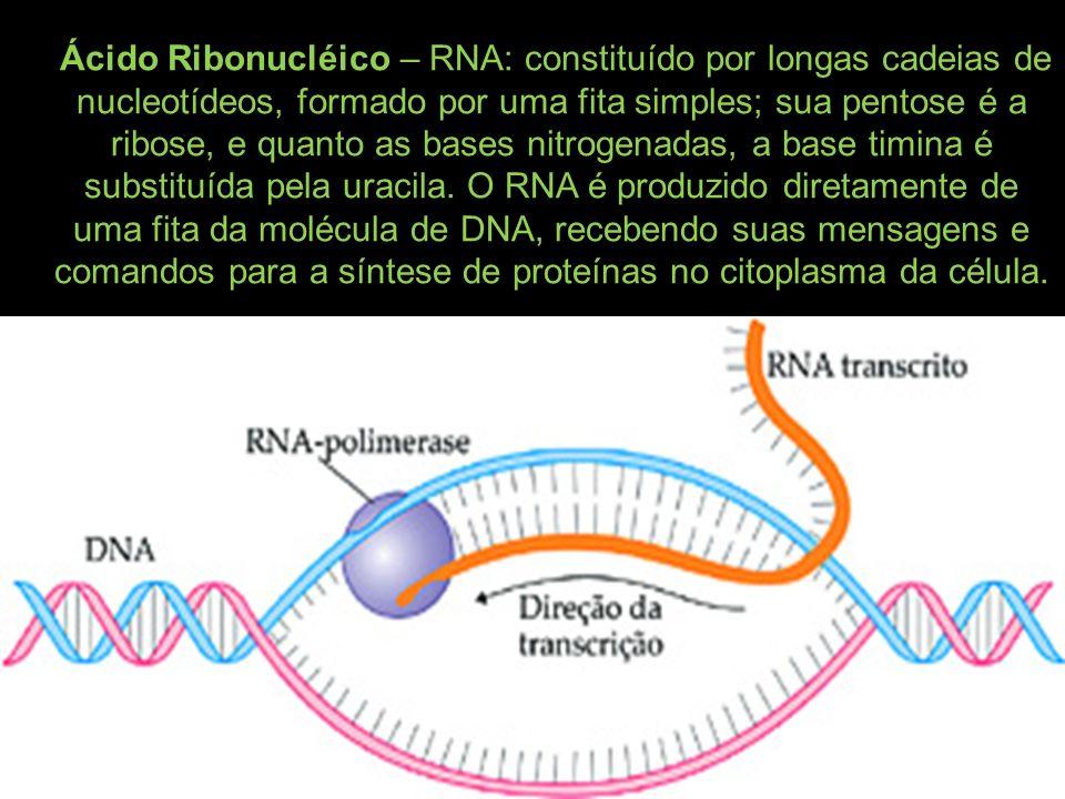 Ácido Ribonucléico – RNA: constituído por longas cadeias de nucleotídeos, formado por uma fita simples; sua pentose é a ribose, e quanto as bases nitrogenadas, a base timina é substituída pela uracila.