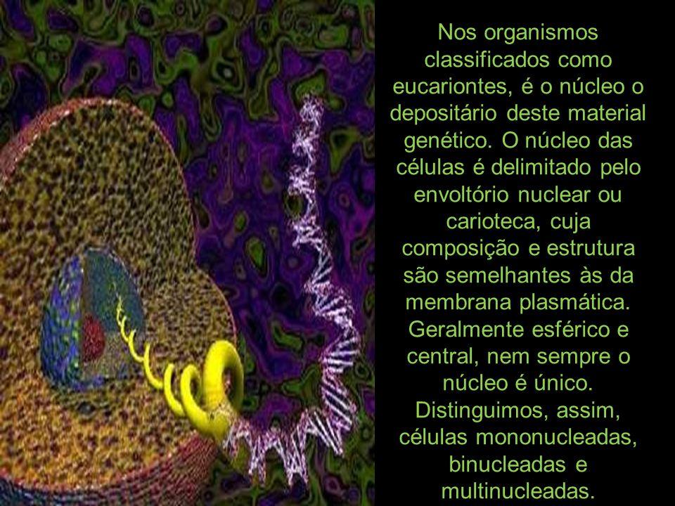 Nos organismos classificados como eucariontes, é o núcleo o depositário deste material genético.
