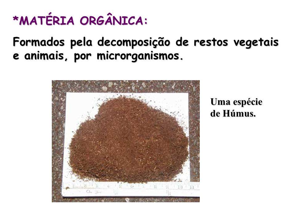 *MATÉRIA ORGÂNICA:Formados pela decomposição de restos vegetais e animais, por microrganismos.