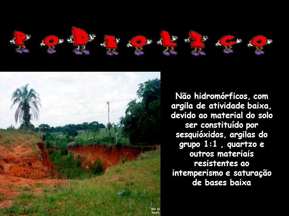 Não hidromórficos, com argila de atividade baixa, devido ao material do solo ser constituído por sesquióxidos, argilas do grupo 1:1 , quartzo e outros materiais resistentes ao intemperismo e saturação de bases baixa
