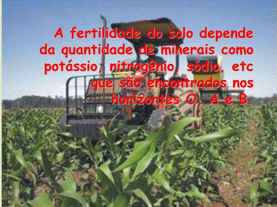 A fertilidade do solo depende da quantidade de minerais como potássio, nitrogênio, sódio, etc que são encontrados nos horizontes O, A e B.