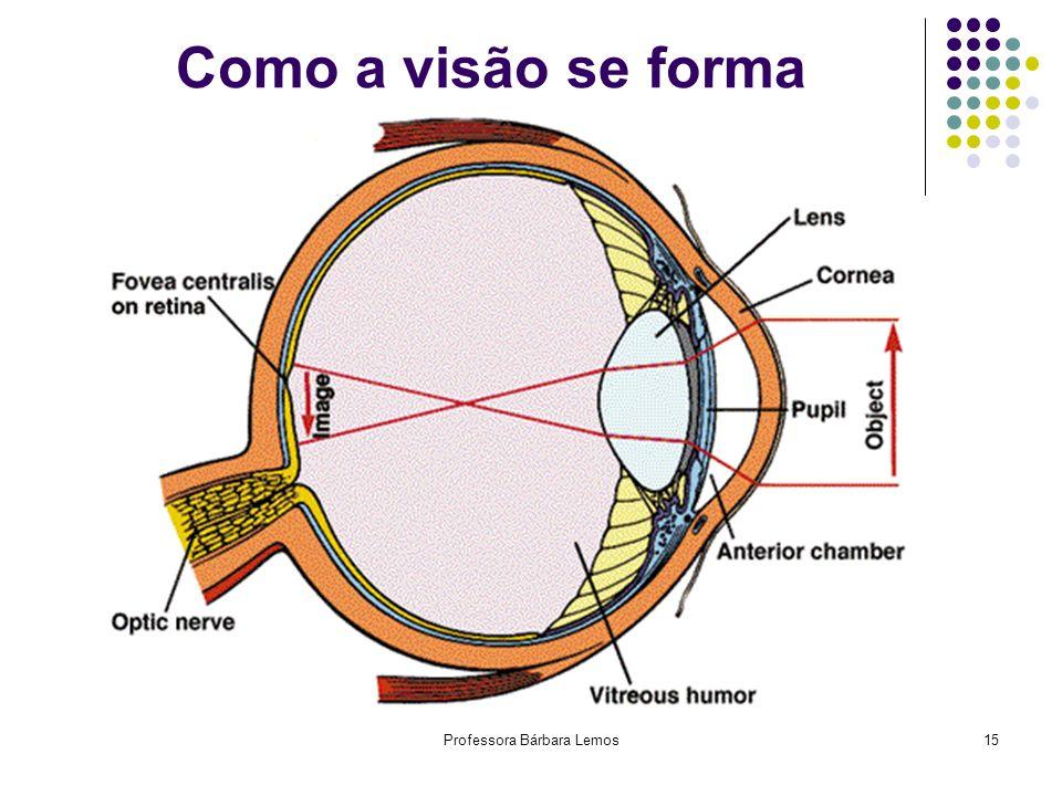 Órgãos Anexos dos Globos Oculares