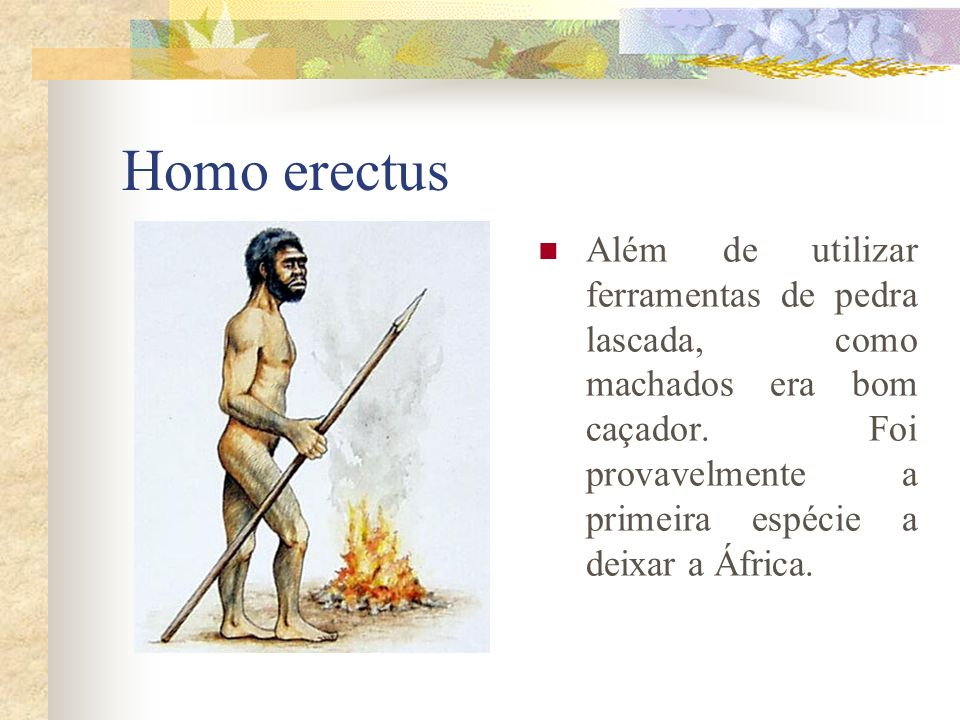 Homo erectusAlém de utilizar ferramentas de pedra lascada, como machados era bom caçador.