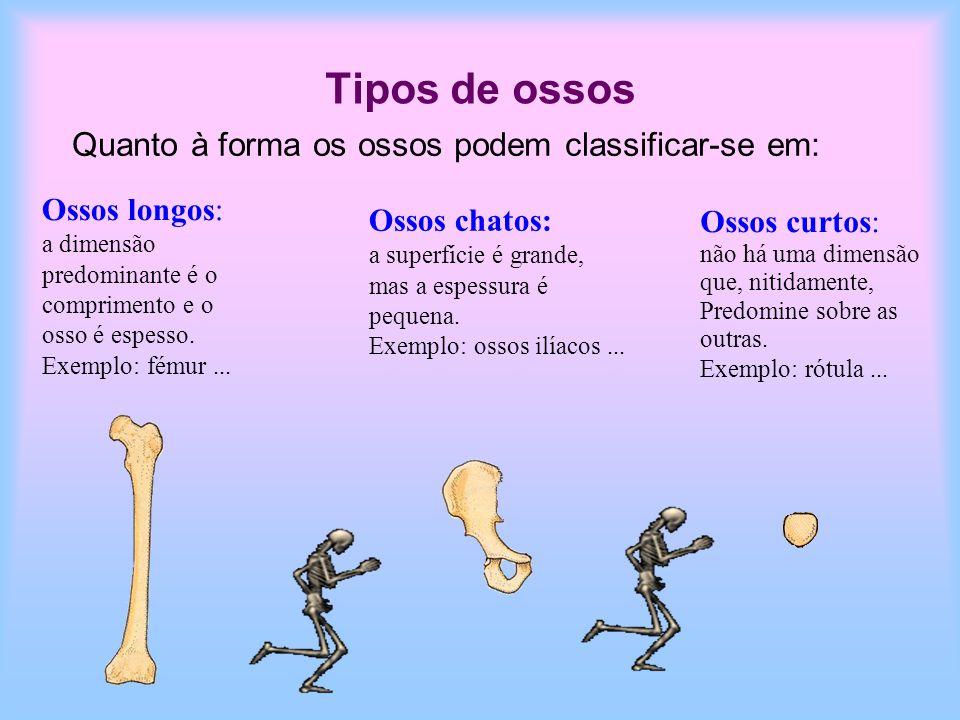 Tipos de ossos Quanto à forma os ossos podem classificar-se em: