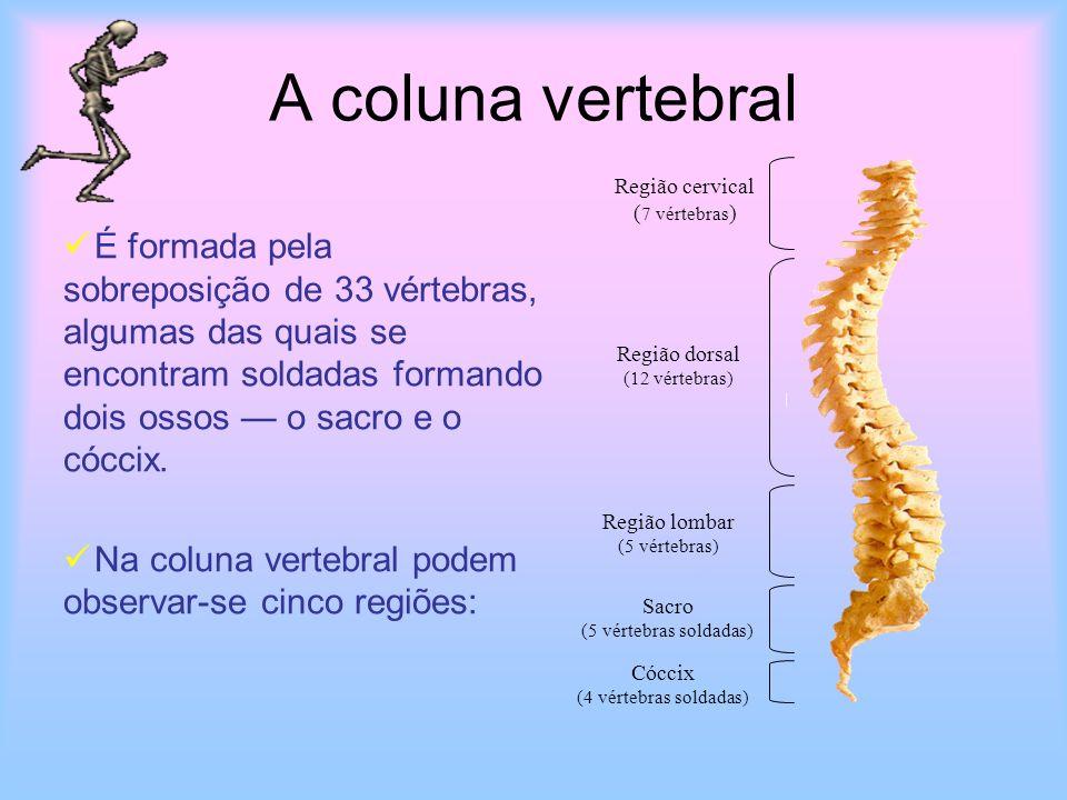 A coluna vertebralRegião cervical. (7 vértebras)